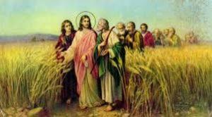https://angela2.myblog.it/v-domenica-di-quaresima-anno-b-gv-1220-33-21-marzo-2021/